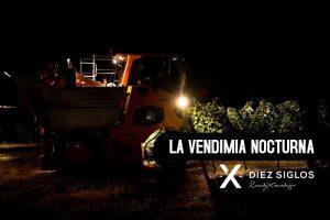 La vendimia nocturna en el vino verdejo - Diez Siglos de Verdejo