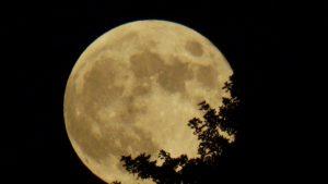 La vendimia nocturna: ventajas frente al cambio climático